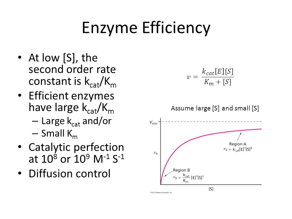 Enzyme Efficiency At low [S], the second order rate constant is kcat/Km. Efficient enzymes have large kcat/Km.